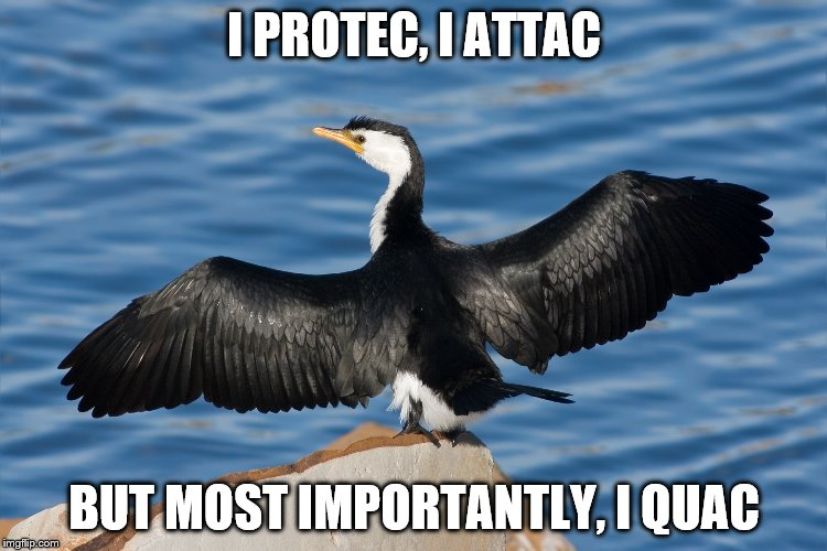 Duckguin | I PROTEC, I ATTAC BUT MOST IMPORTANTLY, I QUAC | image tagged in duckguin | made w/ Imgflip meme maker