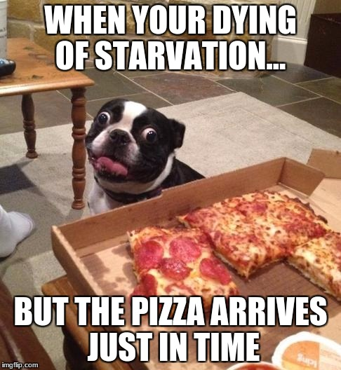 Hungry Pizza Dog | WHEN YOUR DYING OF STARVATION... BUT THE PIZZA ARRIVES JUST IN TIME | image tagged in hungry pizza dog | made w/ Imgflip meme maker