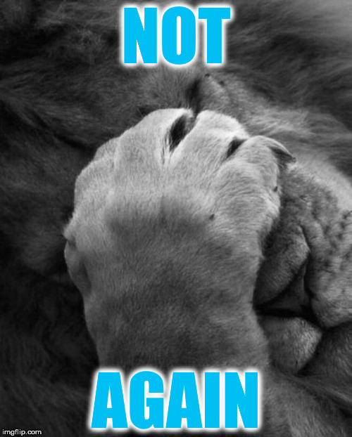 NOT AGAIN | image tagged in lion | made w/ Imgflip meme maker
