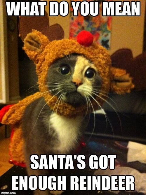 image tagged in cute cat sad christmas,by memepro1 | made w/ Imgflip meme maker