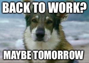 Back to work  | BACK TO WORK? MAYBE TOMORROW | image tagged in hobo | made w/ Imgflip meme maker