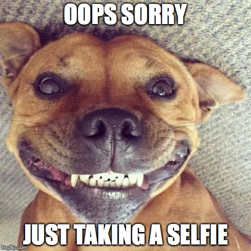 selfie time | OOPS SORRY JUST TAKING A SELFIE | image tagged in smiling dog,sexy selfie | made w/ Imgflip meme maker