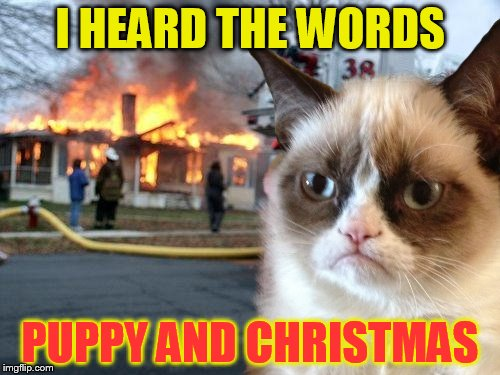 A Grumpy Christmas! | I HEARD THE WORDS PUPPY AND CHRISTMAS | image tagged in memes,disaster girl,grumpy cat,christmas,puppy,grumpy cat christmas | made w/ Imgflip meme maker