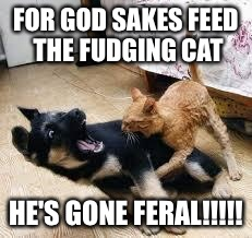 Cat Dog Fight | FOR GOD SAKES FEED THE FUDGING CAT HE'S GONE FERAL!!!!! | image tagged in cat dog fight | made w/ Imgflip meme maker