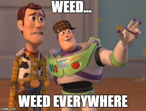 X, X Everywhere Meme | WEED... WEED EVERYWHERE | image tagged in memes,x x everywhere,scumbag | made w/ Imgflip meme maker