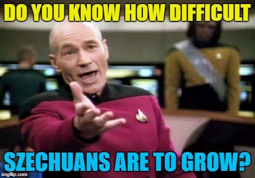 Picard Wtf Meme | DO YOU KNOW HOW DIFFICULT SZECHUANS ARE TO GROW? | image tagged in memes,picard wtf | made w/ Imgflip meme maker