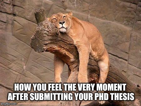 sleeping lion | HOW YOU FEEL THE VERY MOMENT AFTER SUBMITTING YOUR PHD THESIS | image tagged in sleeping lion | made w/ Imgflip meme maker