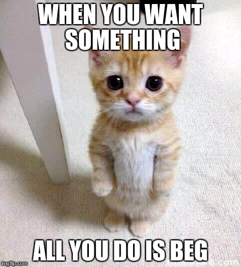 Cute Cat Meme | WHEN YOU WANT SOMETHING ALL YOU DO IS BEG | image tagged in memes,cute cat | made w/ Imgflip meme maker