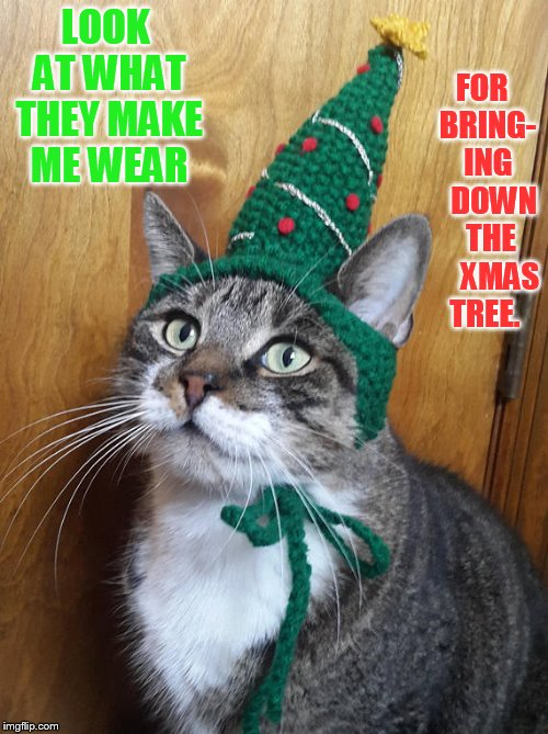 LOOK AT WHAT THEY MAKE ME WEAR FOR  BRING-  ING    DOWN   THE      XMAS TREE. | made w/ Imgflip meme maker