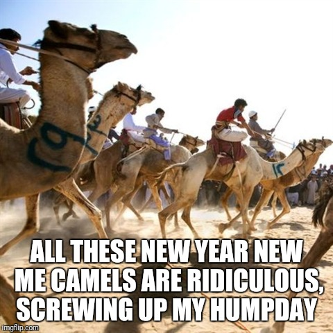 Humpday Stampede | ALL THESE NEW YEAR NEW ME CAMELS ARE RIDICULOUS, SCREWING UP MY HUMPDAY | image tagged in gym,hump day camel | made w/ Imgflip meme maker
