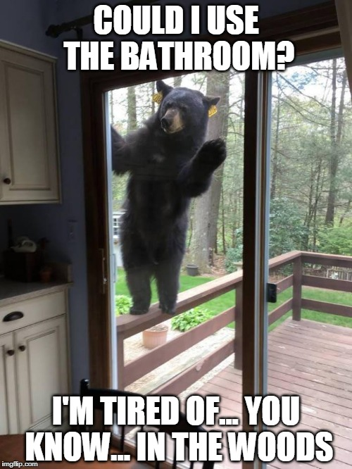 Answers that question | COULD I USE THE BATHROOM? I'M TIRED OF... YOU KNOW... IN THE WOODS | image tagged in bear,woods,bears,black bears | made w/ Imgflip meme maker