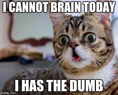 I CANNOT BRAIN TODAY I HAS THE DUMB | image tagged in herpy derpy cat | made w/ Imgflip meme maker