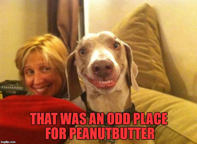 peanutbutter | THAT WAS AN ODD PLACE FOR PEANUTBUTTER | image tagged in peanut butter | made w/ Imgflip meme maker