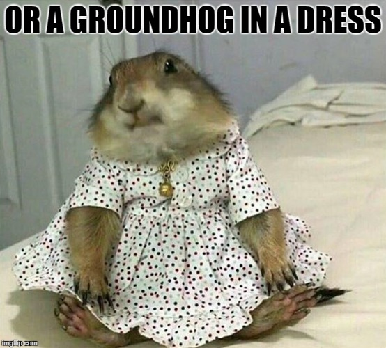 OR A GROUNDHOG IN A DRESS | image tagged in cutie pie | made w/ Imgflip meme maker