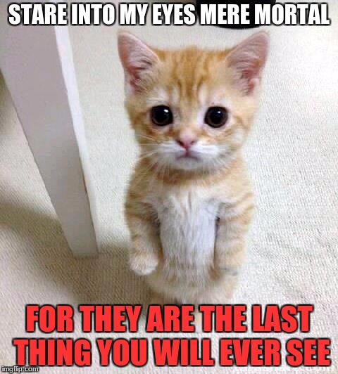 Cute Cat Meme | STARE INTO MY EYES MERE MORTAL FOR THEY ARE THE LAST THING YOU WILL EVER SEE | image tagged in memes,cute cat | made w/ Imgflip meme maker