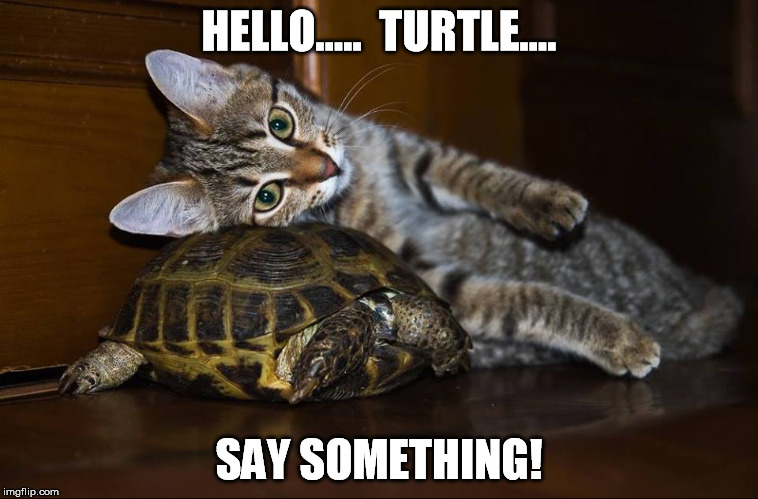 HELLO.....  TURTLE.... SAY SOMETHING! | made w/ Imgflip meme maker