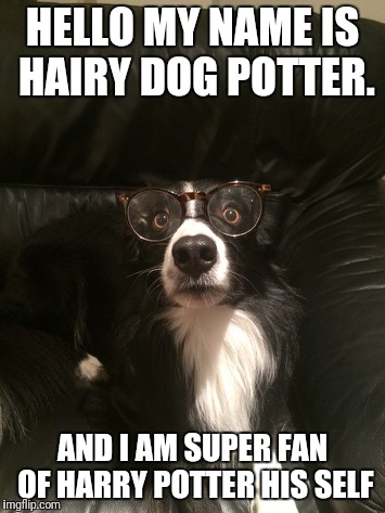 HELLO MY NAME IS HAIRY DOG POTTER. AND I AM SUPER FAN OF HARRY POTTER HIS SELF | image tagged in harry potter as a dog | made w/ Imgflip meme maker