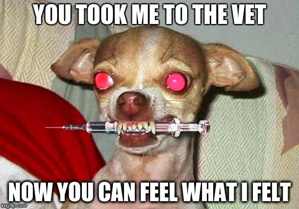 Needle dog | YOU TOOK ME TO THE VET NOW YOU CAN FEEL WHAT I FELT | image tagged in needle dog | made w/ Imgflip meme maker