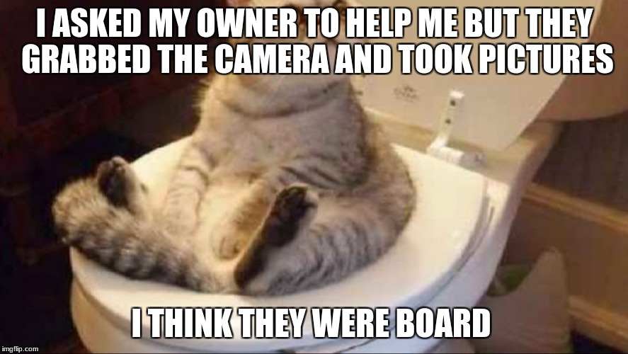 I ASKED MY OWNER TO HELP ME BUT THEY GRABBED THE CAMERA AND TOOK PICTURES I THINK THEY WERE BOARD | image tagged in funny | made w/ Imgflip meme maker