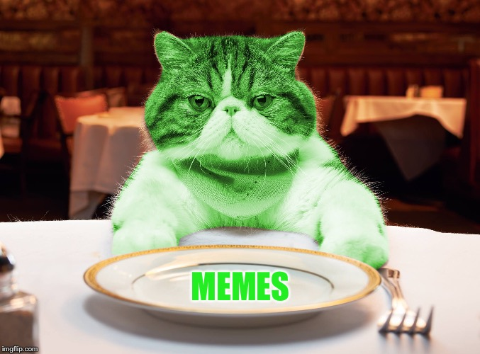 RayCat Hungry | MEMES | image tagged in raycat hungry | made w/ Imgflip meme maker