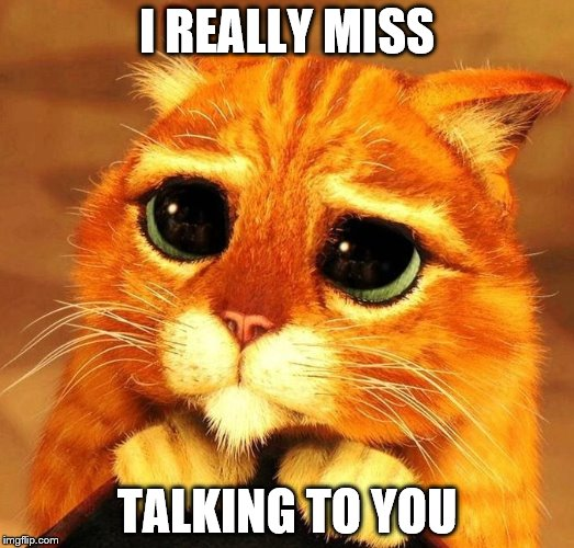 I really miss talking to you | I REALLY MISS TALKING TO YOU | image tagged in miss you,miss talking to you,sad cat | made w/ Imgflip meme maker