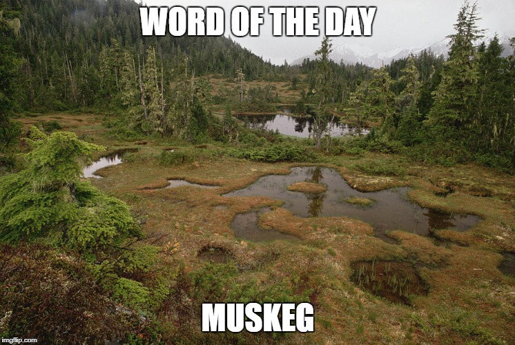 WORD OF THE DAY MUSKEG | image tagged in muskeg | made w/ Imgflip meme maker