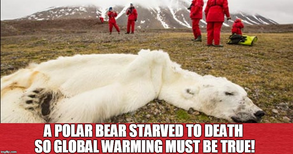 A POLAR BEAR STARVED TO DEATH SO GLOBAL WARMING MUST BE TRUE! | made w/ Imgflip meme maker