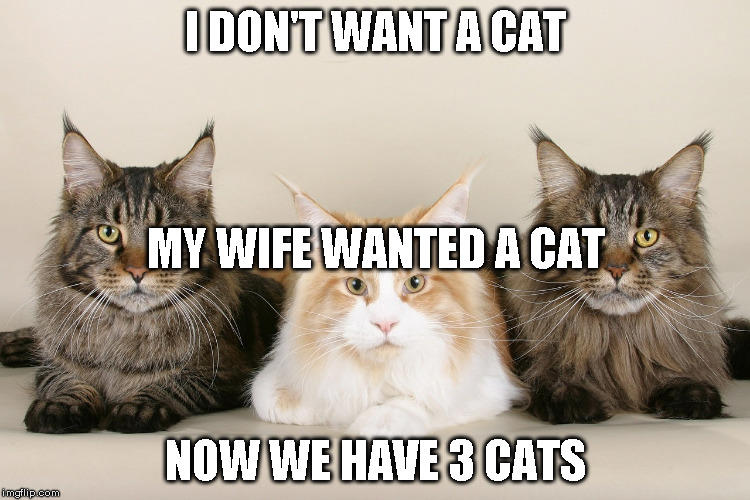 Negotiating with the wife |  I DON'T WANT A CAT; MY WIFE WANTED A CAT; NOW WE HAVE 3 CATS | image tagged in cats,wife | made w/ Imgflip meme maker