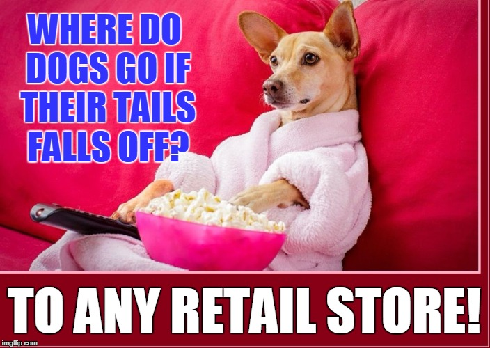 Random Thoughts While Watching the Late Movie 2 |  WHERE DO DOGS GO IF THEIR TAILS FALLS OFF? TO ANY RETAIL STORE! | image tagged in random thoughts dog,vince vance,dog eating popcorn,dog watching tv,dog memes | made w/ Imgflip meme maker