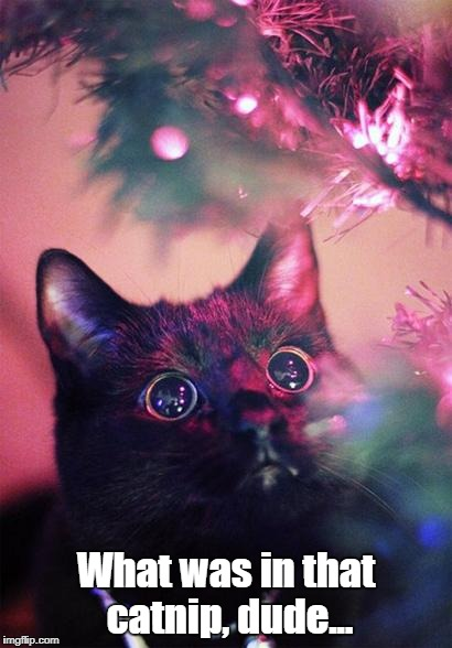 Lights...soo shiny... | What was in that catnip, dude... | image tagged in christmas cat,memes | made w/ Imgflip meme maker