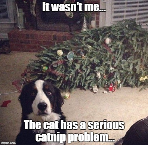 An intervention is warranted, I think. | It wasn't me... The cat has a serious catnip problem... | image tagged in dog christmas tree,memes | made w/ Imgflip meme maker