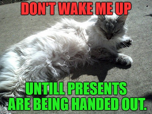 Holiday cat | DON'T WAKE ME UP UNTILL PRESENTS ARE BEING HANDED OUT. | image tagged in memes,cat,happy holidays | made w/ Imgflip meme maker