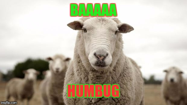 Sheep | BAAAAA HUMBUG | image tagged in sheep | made w/ Imgflip meme maker