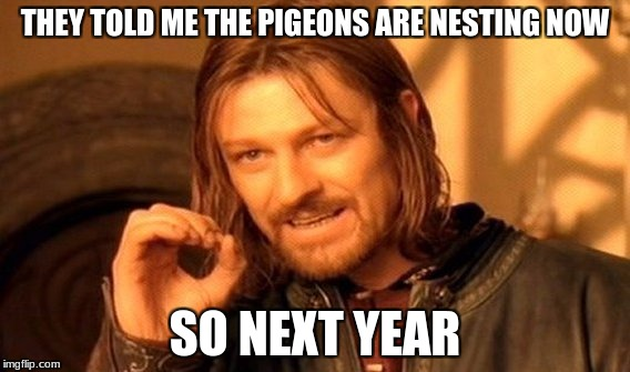 One Does Not Simply Meme | THEY TOLD ME THE PIGEONS ARE NESTING NOW SO NEXT YEAR | image tagged in memes,one does not simply | made w/ Imgflip meme maker