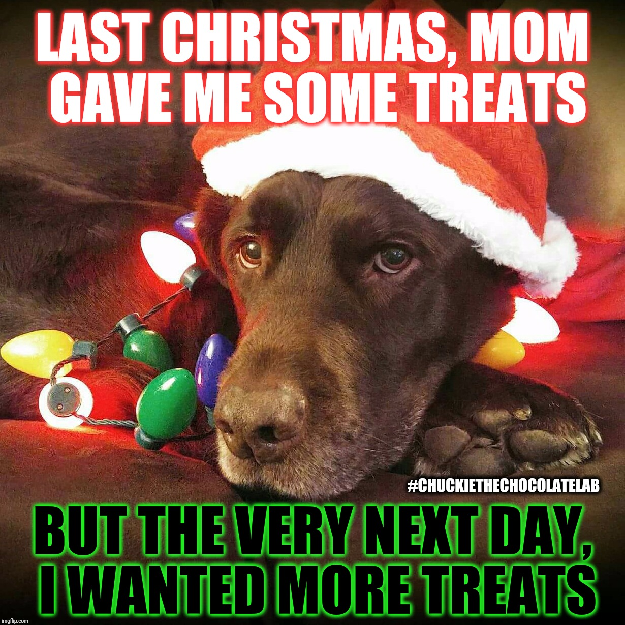 Last Christmas  | LAST CHRISTMAS, MOM GAVE ME SOME TREATS #CHUCKIETHECHOCOLATELAB BUT THE VERY NEXT DAY, I WANTED MORE TREATS | image tagged in chuckie the chocolate lab teamchuckie,dogs,funny,memes,christmas,holidays | made w/ Imgflip meme maker