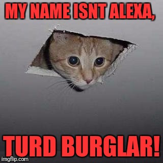 Ceiling Cat | MY NAME ISNT ALEXA, TURD BURGLAR! | image tagged in memes,ceiling cat | made w/ Imgflip meme maker