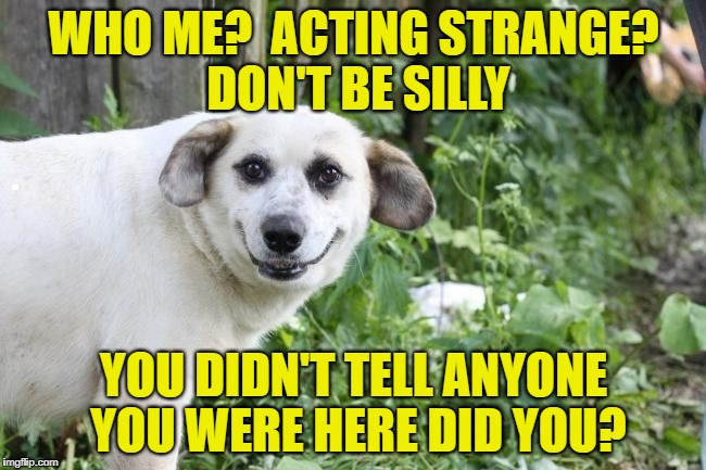Creepy Dog | . | image tagged in memes,meme,dog,dogs,creepy,creepy dog | made w/ Imgflip meme maker