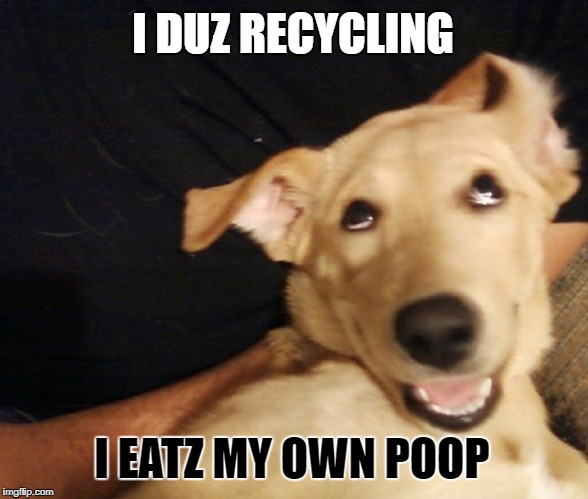 Dogoodle Says... | . | image tagged in memes,meme,dogs,dog,dogoodle says,poop | made w/ Imgflip meme maker
