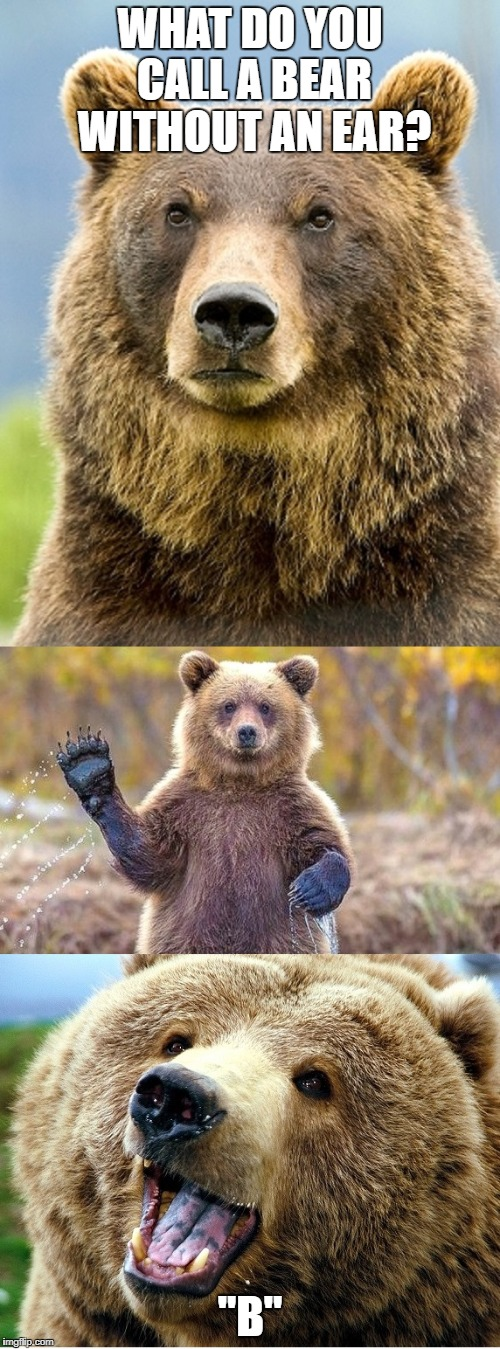 "BAD PUN BEAR | WHAT DO YOU CALL A BEAR WITHOUT AN EAR? ""B"" 