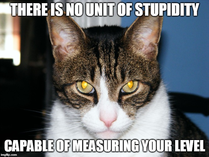 THERE IS NO UNIT OF STUPIDITY CAPABLE OF MEASURING YOUR LEVEL | image tagged in devious cat | made w/ Imgflip meme maker