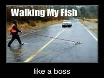 image tagged in walk your fish,what,like a boss,memes | made w/ Imgflip meme maker