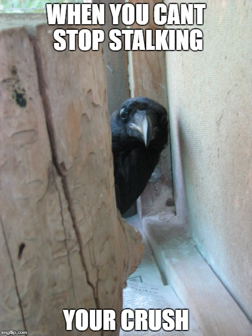 Peekaboo Crow | WHEN YOU CANT STOP STALKING YOUR CRUSH | image tagged in peekaboo crow | made w/ Imgflip meme maker
