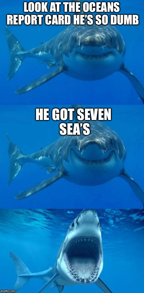 Seven C's in school | LOOK AT THE OCEANS REPORT CARD HE'S SO DUMB HE GOT SEVEN SEA'S | image tagged in bad shark pun,seven seas,merry christmas,memes,funny | made w/ Imgflip meme maker