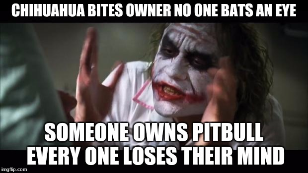 the discriminatory people need eff off | CHIHUAHUA BITES OWNER NO ONE BATS AN EYE SOMEONE OWNS PITBULL EVERY ONE LOSES THEIR MIND | image tagged in memes,and everybody loses their minds,pitbull prejudice | made w/ Imgflip meme maker