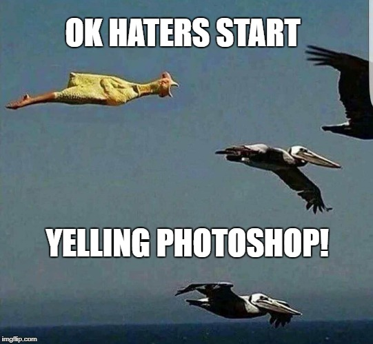 photoshop | OK HATERS START YELLING PHOTOSHOP! | image tagged in chicken | made w/ Imgflip meme maker