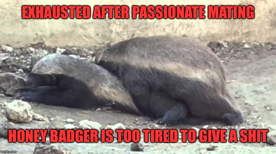 EXHAUSTED AFTER PASSIONATE MATING HONEY BADGER IS TOO TIRED TO GIVE A SHIT | made w/ Imgflip meme maker