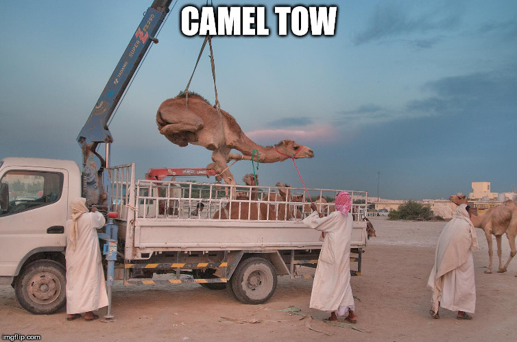 camel tow | CAMEL TOW | image tagged in funny meme | made w/ Imgflip meme maker