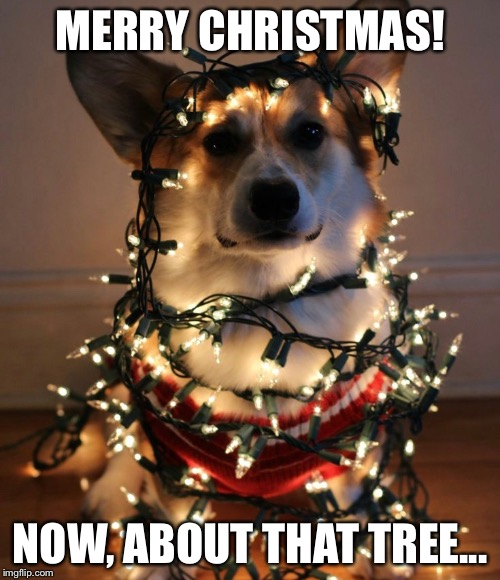 MERRY CHRISTMAS! NOW, ABOUT THAT TREE... | image tagged in memes,merry christmas,tree,raydog | made w/ Imgflip meme maker