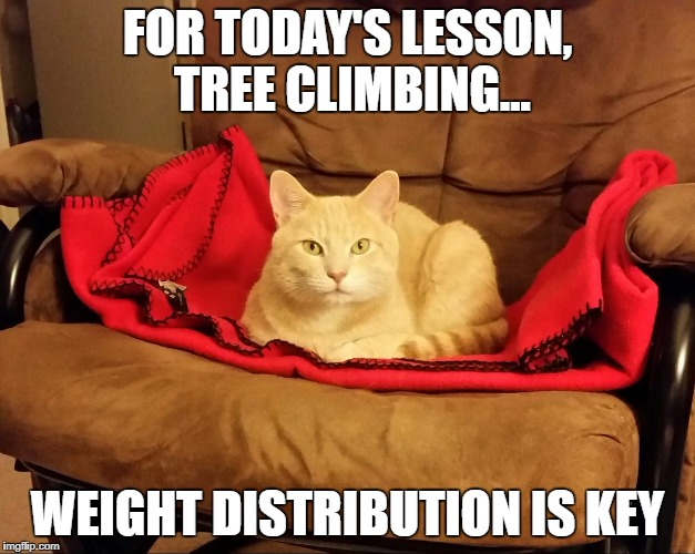 Sugar Ray | FOR TODAY'S LESSON, TREE CLIMBING... WEIGHT DISTRIBUTION IS KEY | image tagged in sugar ray | made w/ Imgflip meme maker