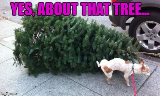 YES, ABOUT THAT TREE... | made w/ Imgflip meme maker